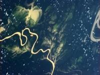 Zelenilo Amazona